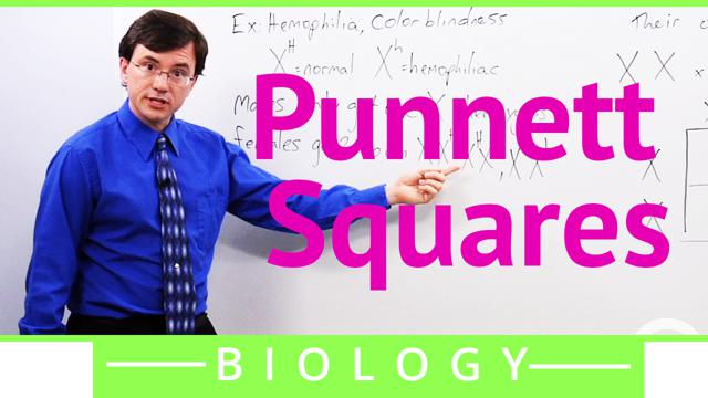 Punnett Squares Biology Video By Brightstorm