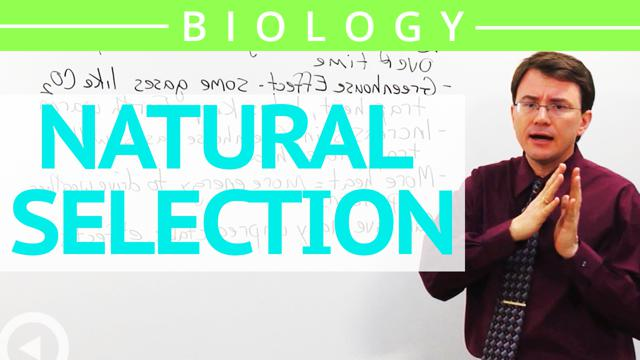 carolina natural selection for ap biology Name: _____ ap biology – lab 17 page 1 of 8 lab 17 – natural selection simulation introduction: this game was invented by g ledyard stebbins, a pioneer in the evolution of plants.
