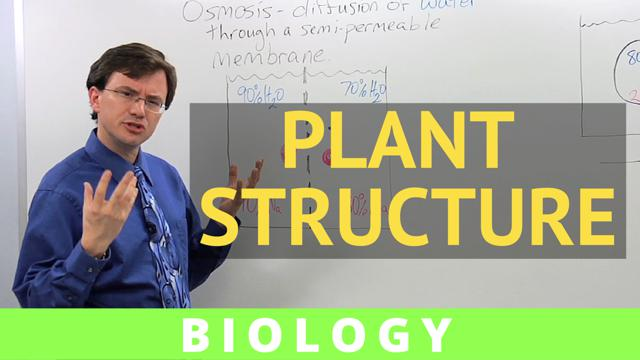 ap biology essay plant reproduction